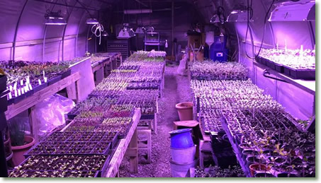 Adams Greenhouse & Produce Using TotalGrow Broad Grow Spectrum LED Light Fixtures for Supplemental Lighting