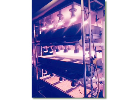 TotalGrow Lights Designed into Shipping Container Aquaponics Setups for Growing Baby Greens